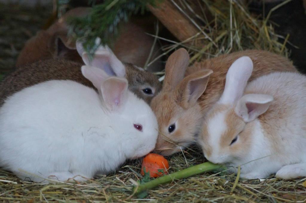 Unsere Kanichen